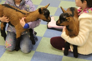 DAYCARE LIBRARY GOATS MATCH 26 2013 012