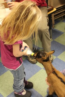 DAYCARE LIBRARY GOATS MATCH 26 2013 021