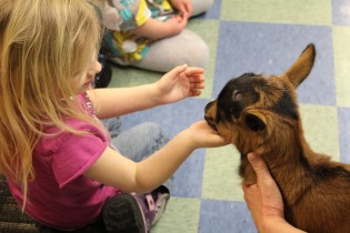 DAYCARE LIBRARY GOATS MATCH 26 2013 042