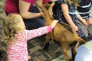 DAYCARE LIBRARY GOATS MATCH 26 2013 044