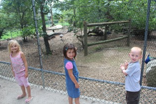 DAYCARE GRAY GAME GAME FARM AUG 6 2013 042